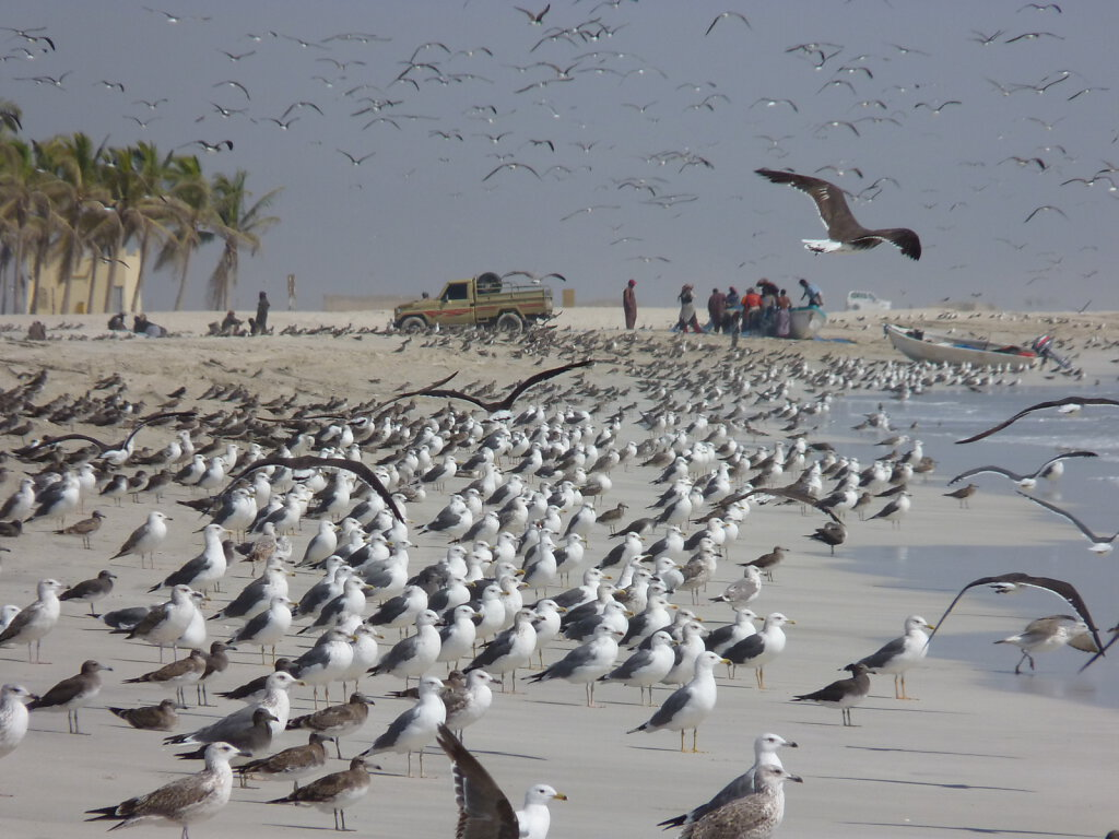 Salalah Strand / Beach